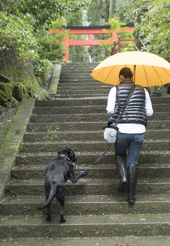 箱根神社の階段をのぼるハル