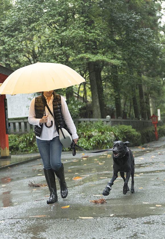 雨でもお散歩水たまり〜